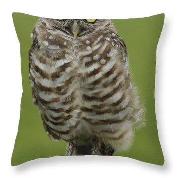 Burrowing Owl Lookout Throw Pillow