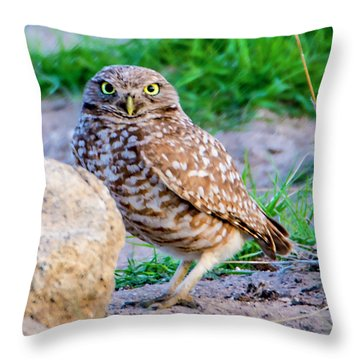 Burrowing Owl Throw Pillow