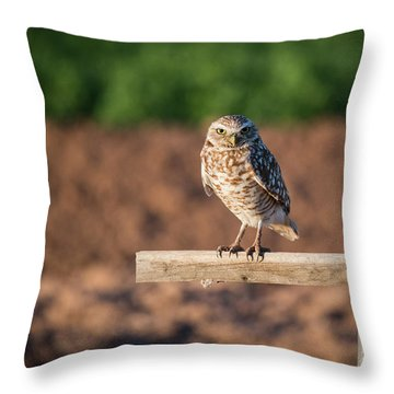 Burrowing Owl On A Perch Throw Pillow