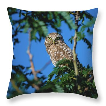 Burrowing Owl Sitting In A Tree Throw Pillow