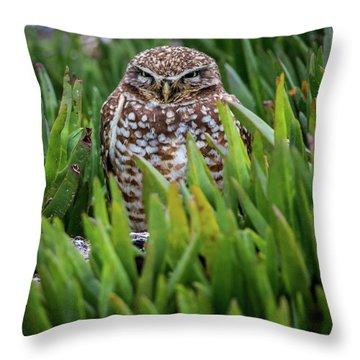 Burrowing Owl Throw Pillow