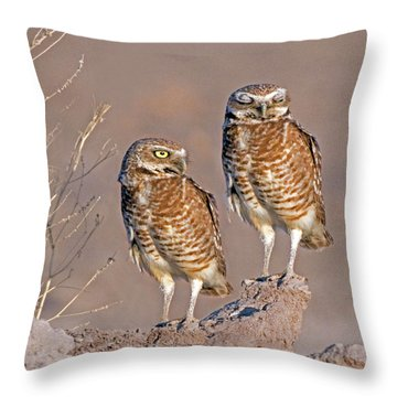 Burrowing Owls At Salton Sea Throw Pillow
