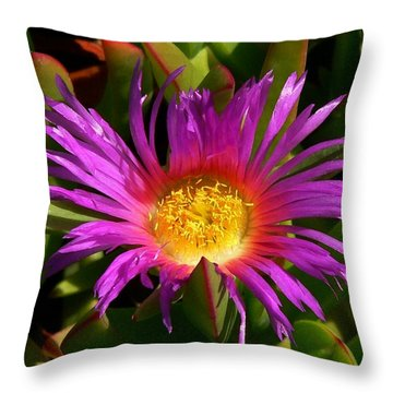 Throw Pillow featuring the photograph Burst Of Beauty by Debbie Karnes