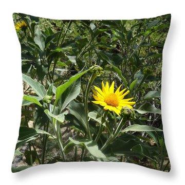 Burst Of Sun Flower Throw Pillow