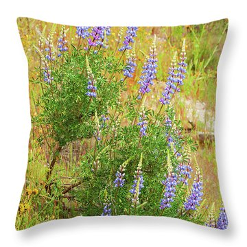 Throw Pillow featuring the photograph Bush Lupine by Ram Vasudev