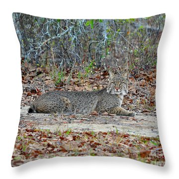 Throw Pillow featuring the photograph Bushed Bobcat by Al Powell Photography USA