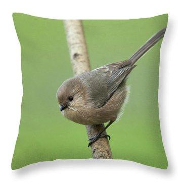 Bushtit Throw Pillow by Doug Herr