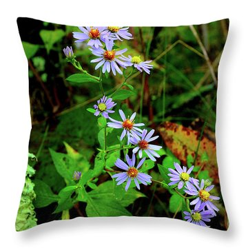 Bushy Aster In Sumac Grove Throw Pillow by Thomas R Fletcher