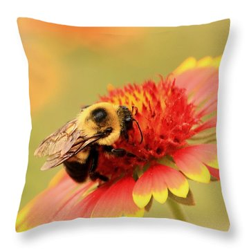Throw Pillow featuring the photograph Busy Bumblebee by Chris Berry