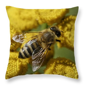 Busy Honey Bee Throw Pillow
