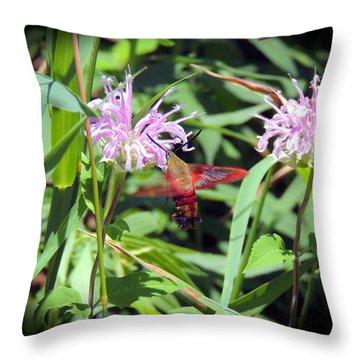 Busy Hummingbird Moth Throw Pillow by Teresa Schomig