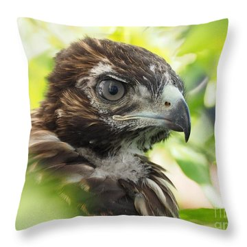 Buteo Jamaicensis Throw Pillow