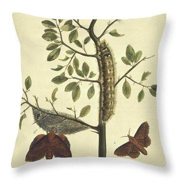 Butterflies, Caterpillars And Plants Throw Pillow