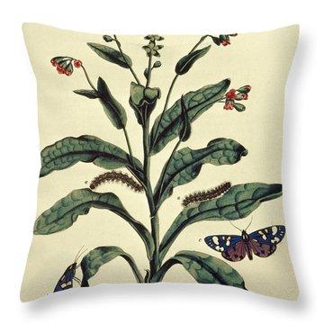 Butterflies, Caterpillars And Plants Plate Vi  Throw Pillow