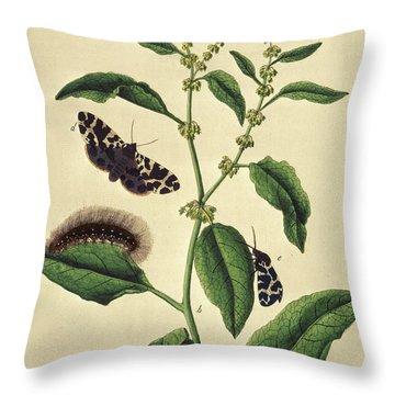 Butterflies, Caterpillars And Plants Plate Viii By J Dutfiel Throw Pillow