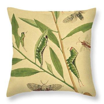 Butterflies, Caterpillars And Plants Plate X By J Dutfield Throw Pillow