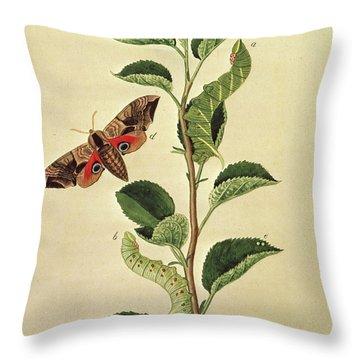 Butterflies, Caterpillars And Plants Plate Xii  Throw Pillow