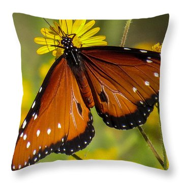 Butterfly 1 Throw Pillow