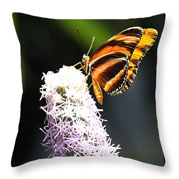 Butterfly 2 Throw Pillow by Tom Prendergast