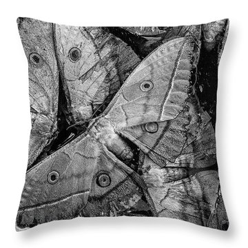 Butterfly #2056 Bw Throw Pillow