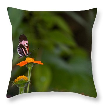 Butterfly 26 Throw Pillow