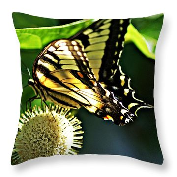 Butterfly 4 Throw Pillow by Joe Faherty