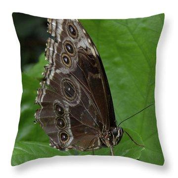 Butterfly 5 Throw Pillow