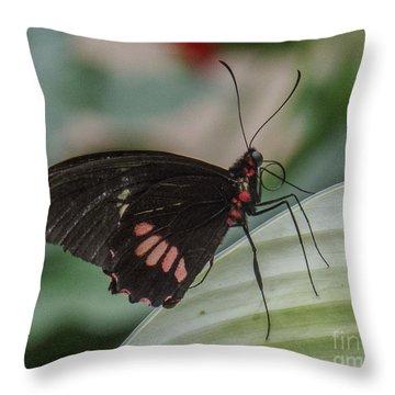 Butterfly 8 Throw Pillow