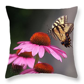 Butterfly And Coneflower Throw Pillow