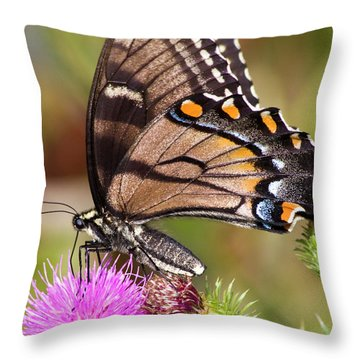 Butterfly And Thistle Throw Pillow