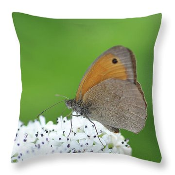 Throw Pillow featuring the photograph Butterfly by Bess Hamiti
