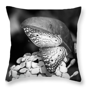 Butterfly Bw - Ins18 Throw Pillow