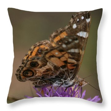 Throw Pillow featuring the photograph Butterfly by Cathy Harper