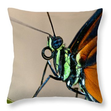 Butterfly Closeup Throw Pillow by Christopher Holmes