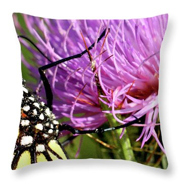 Butterfly On Bull Thistle Throw Pillow