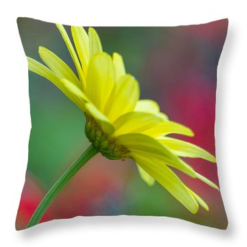 Butterfly Daisy Throw Pillow