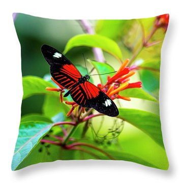 Throw Pillow featuring the photograph Butterfly  by David Morefield