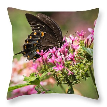 Throw Pillow featuring the photograph Butterfly Dream by Julie Andel