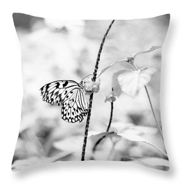 Butterfly Eatting  Throw Pillow