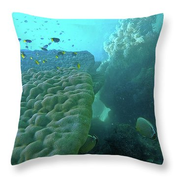 Throw Pillow featuring the photograph Butterfly Fish  by Debbie Cundy