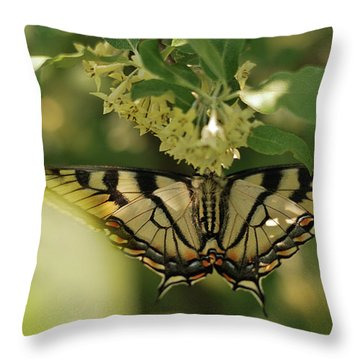 Throw Pillow featuring the photograph Butterfly From Another Side by Susan Capuano