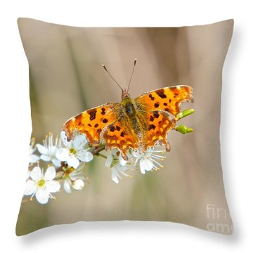 Throw Pillow featuring the photograph Butterfly by Gary Bridger
