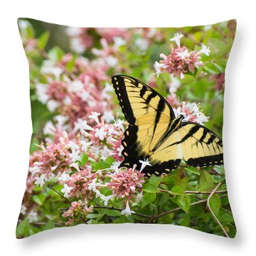 Throw Pillow featuring the photograph Butterfly Haven by Julie Andel