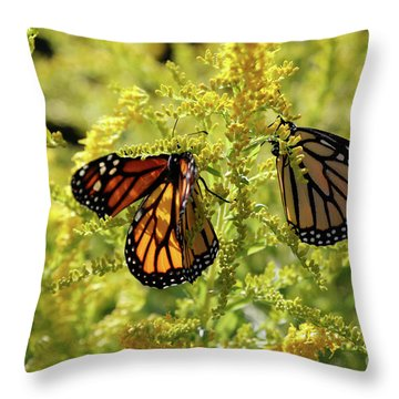 Butterfly In Fall  Throw Pillow