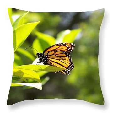 Throw Pillow featuring the photograph Butterfly In Sunlight by Carol  Bradley