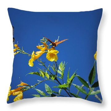 Butterfly In The Sonoran Desert Musuem Throw Pillow by Donna Greene