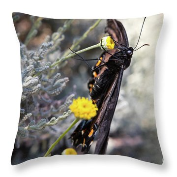 Butterfly Throw Pillow by Lawrence Burry
