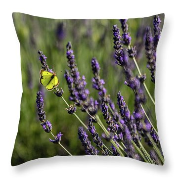 Butterfly N Lavender Throw Pillow