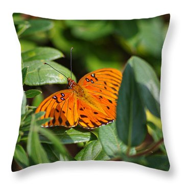 Butterfly On A Sunny Day Throw Pillow