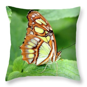 Butterfly On Leaf Throw Pillow by Meta Gatschenberger
